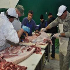 Bologna celebra il maiale